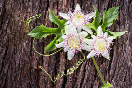 Passiflora flower, fruit of passion on wooden background.