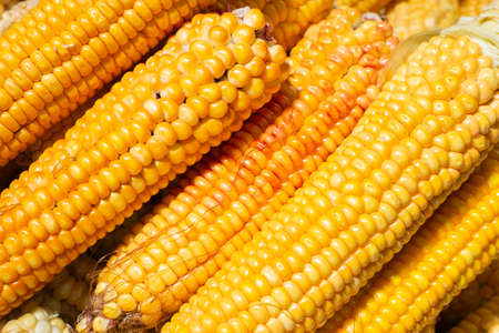 pile of corn cobs in the market close-up