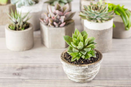 collection of succulents on a light colored table, close-up image Stock fotó