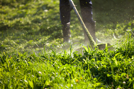 grass cutting: Man mowing grass on his land