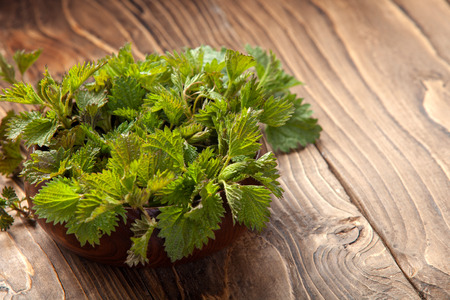 Young nettle leaves in a pot on a rustic background, stinging nettles Stock Photo