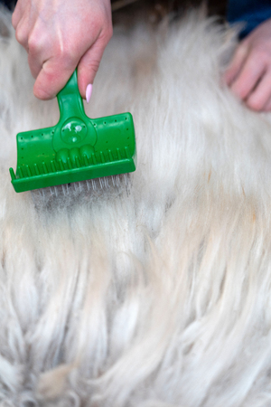 Animal hair worsted wool with brush and comb. combed and not. the process of combing the hair with special comb and brush,with free text space