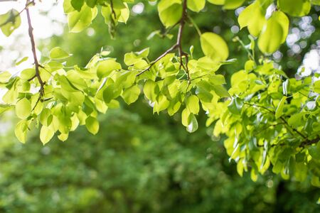 Closeup view of green leaf with beauty bokeh under sunlight. natural and freshness wallpaper concept. Green nature background. 免版税图像