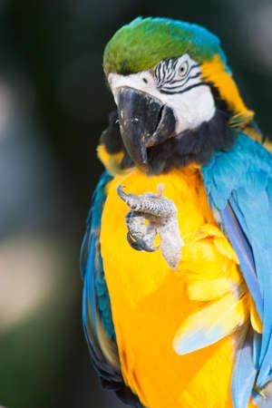 turismo ecologico: Beautiful Macaw portrait  in the wild,Mexico,Tabasco,Villahermosa Foto de archivo