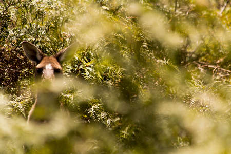 Beautiful kangaroo outdoors Perth Australia