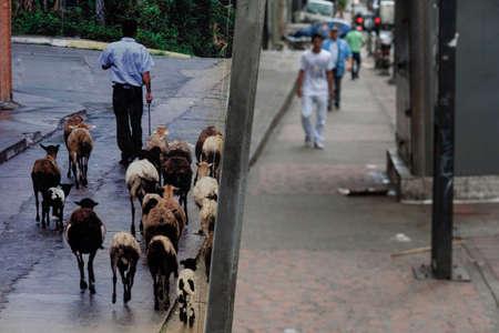 Caracas,Venezuela. People walking through the streets of the Colonial Caracas. 版權商用圖片