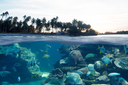 Compositing Below and above the sea surface with beautiful fish and palm trees on the beach and beautiful sunset.
