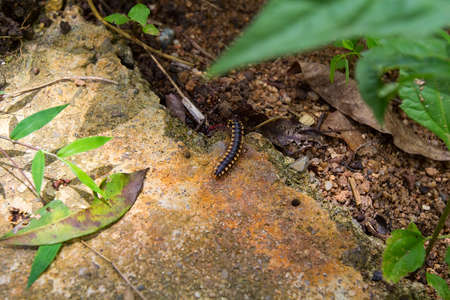segmented bodies: Centipede crawling in the park on a stone Stock Photo