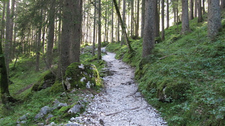 Forest path through the lower Reintal - rise Zugspitze