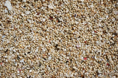 lite: Lite yellow sea sand texture for background, close up Stock Photo