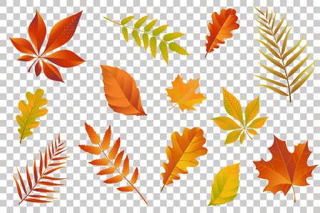 Autumn falling leaves isolated on transparent background. Vector illustration.