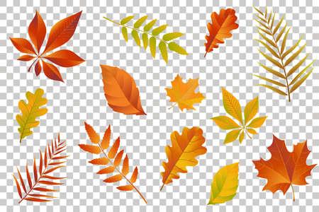 Herfst vallende bladeren geïsoleerd op transparante achtergrond. Vector illustratie. Stock Illustratie