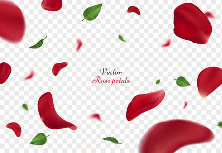 Falling red rose petals and green leaves isolated on transparent background.