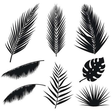 Vector conjunto de silueta de hojas de palmera tropical aislado sobre fondo blanco. Flora exótica de verano. Palma de la selva y hoja de monstera. Ilustración para su diseño.