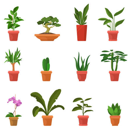 House plants vector illustration. Set of colorful indoor plants in flat cartoon style. Green leaves and inflorescences. Decorative elements for home and garden. Eps 10.