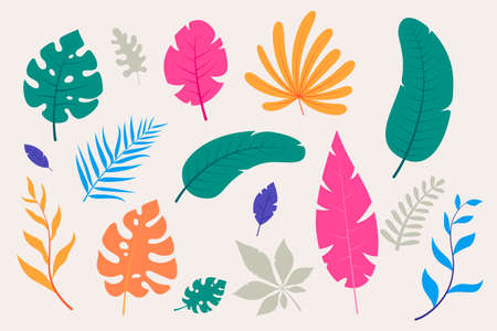 Collection of colorful tropical leaves in flat style. Decorative leaves of exotic plants - monstera, palm, fern, etc. Summer foliage. Elements for your floral design. Vector illustration.