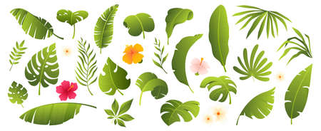 Tropical leaves collection. Tropical plants and flowers isolated on white. Elements for your design. Vector illustration. Ilustração