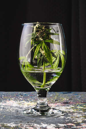 in the background in blur a bud of medical cannabis in a wine glass on a gray splashed paint background in dark. Vertical background Imagens
