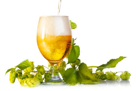 Hop cones with beer isolated on white photo