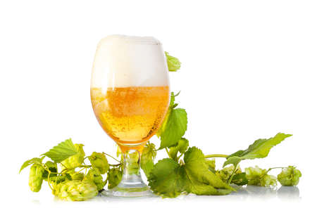 Hop cones with beer isolated on white Stock Photo - 17015751