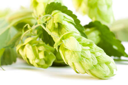 hop cone: Detail of hop cone and leaves on white background Stock Photo