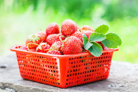strawberry in red bowl photo