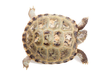 tortoise isolated on white. top view Imagens