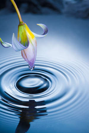 Flower with drop and splash in water photo