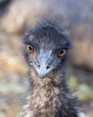 �meu: Emu.