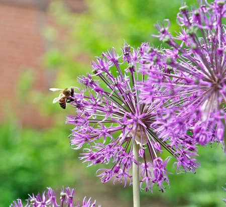 nectar: Collecting nectar