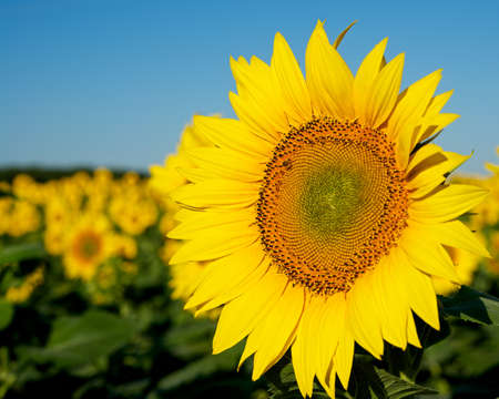 Solar flowers. photo