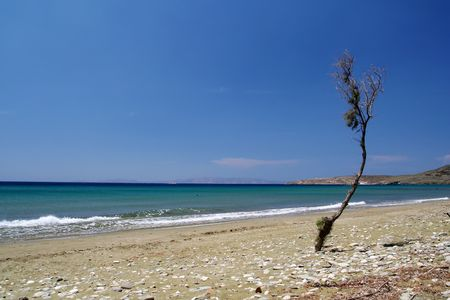 hectic: A nice empty beach with a little lonely hectic tree on Tinos island, Greece