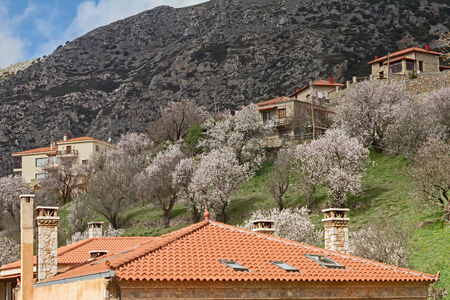 burgeoning: Blooming trees at the Greek mountain resort of Arachova
