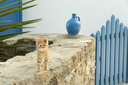 ewer: A little cat at the entrance of a typical Greek island home, Serifos