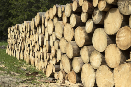 lumbering: Logs arranged in a long pile, waiting to be transported