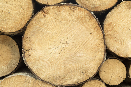 transported: Logs arranged, waiting to be transported to be used in lumber industry