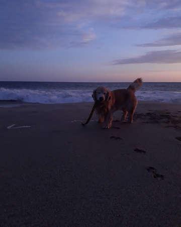 A happy dog on the beach 版權商用圖片 - 155892791