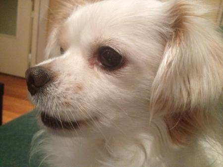 otganimalpets01: White puppy