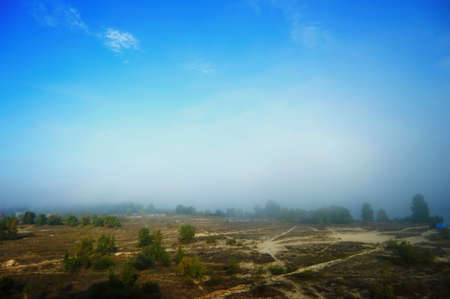 Landscape with fog and blue sky. Trees in the morning mist