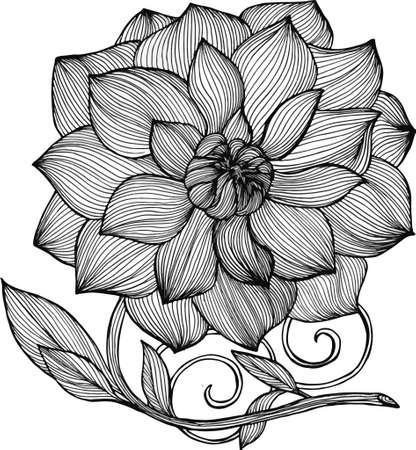 Black and white peony illustration. Elegance of lines Illustration