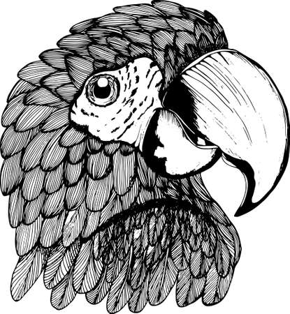 An illustration of a black-and-white parrot. Exotic bird. Imagens - 79456073