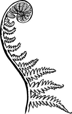Black and white picture of a fractal leaf. Spiral fern