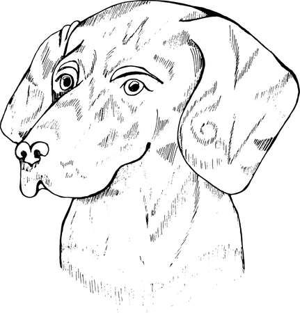 Black and white dog illustration. Head tatoo Labrador.