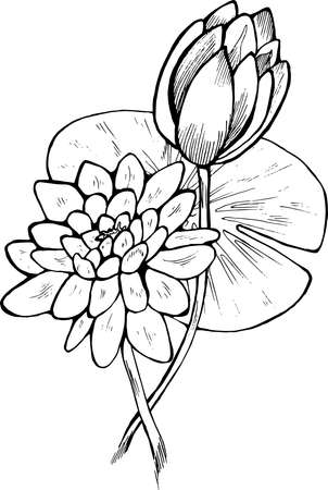 Black And White Lotus Flower Illustration. Beautiful Flower. Royalty ...