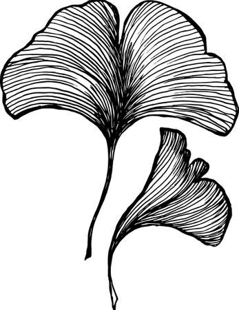 Vector of leaves ginkgobiloby. Black and white drawing by hand. Idea for tattoo.