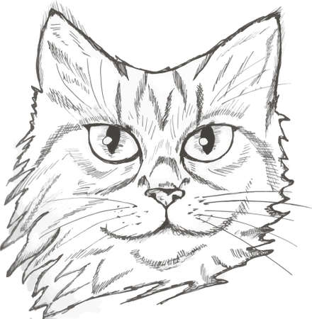 Illustration of a portrait of a cat. Beautiful look for a house pet.