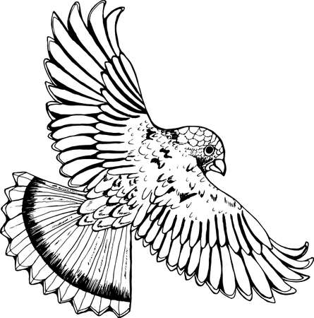 Black and white drawing of an eagle. Stockfoto