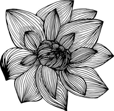 Lotus painting made by freehand lines. Tattoo idea. Vecteurs