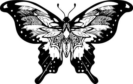 Black white butterfly picture. Ornament, poetry of the night.