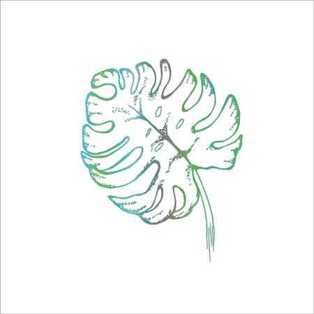 Painting leaf monstera. Graphic drawing of a flower.